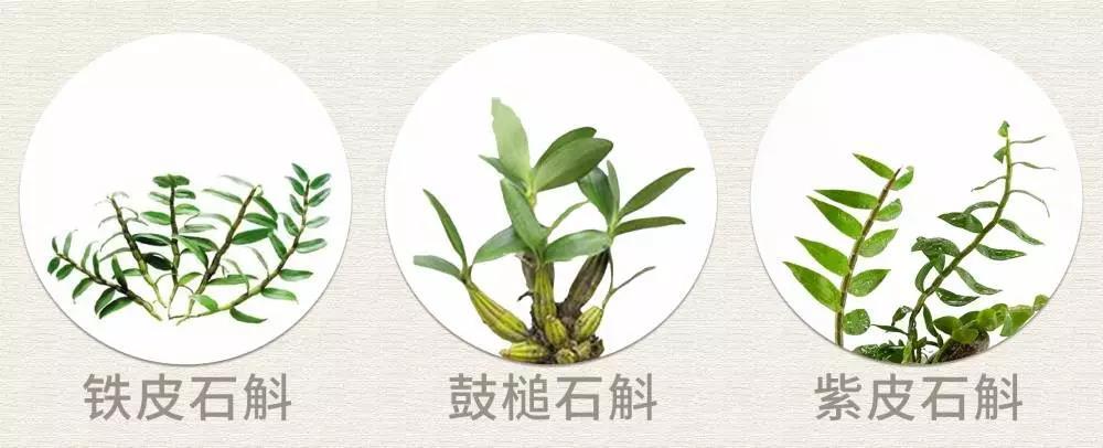 石斛种类与作用