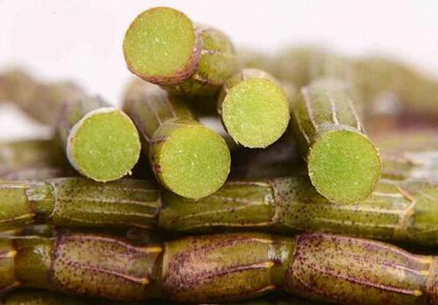铁皮石斛花有哪些养生功效?