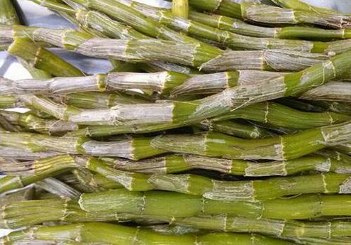 女性长期吃铁皮石斛有什么功效?