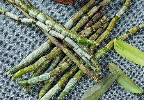 铁皮石斛如何过冬?铁皮石斛在冬天需要做哪些防护?