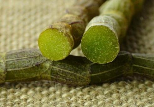 鲜铁皮石斛一天的吃多少合适?