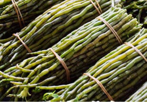 怎样选择种植铁皮石斛的基质?