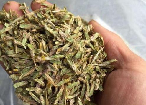铁皮石斛的种植条件是什么?