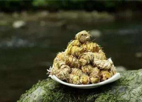 干燥综合征吃什么好?干燥综合征怎样吃石斛?