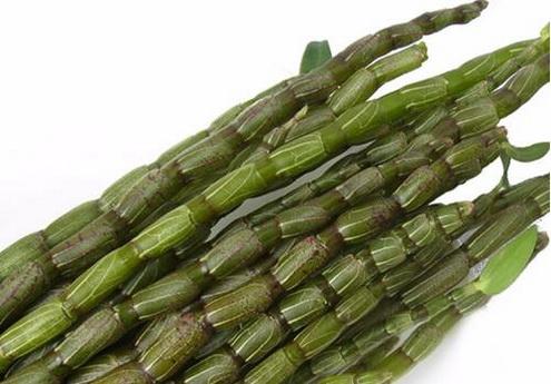 为什么说春季要多吃铁皮石斛鲜条?